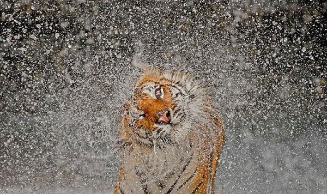 Αυτή είναι η φωτογραφία που κέρδισε στον διαγωνισμό του National Geographic (φωτό) - Κυρίως Φωτογραφία - Gallery - Video