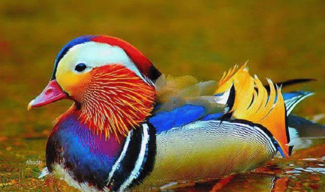 Ο υπέροχος κόσμος των ζώων και των πουλιών-εικόνες μοναδικές - Κυρίως Φωτογραφία - Gallery - Video