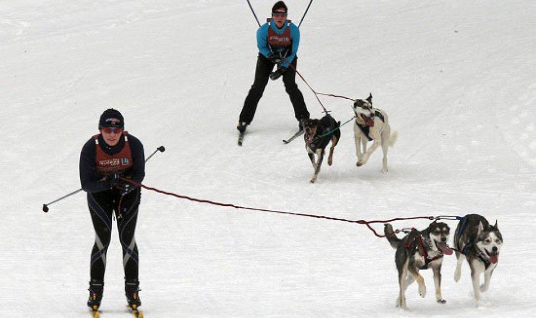 Η φωτογραφία της ημέρας: Σκι…&...σκύλοι! - Κυρίως Φωτογραφία - Gallery - Video