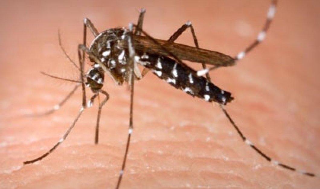 Έκτακτα μέτρα και ανησυχία για τα κουνούπια μετά τον πρώτο θάνατο και στην Αθήνα! - Κυρίως Φωτογραφία - Gallery - Video