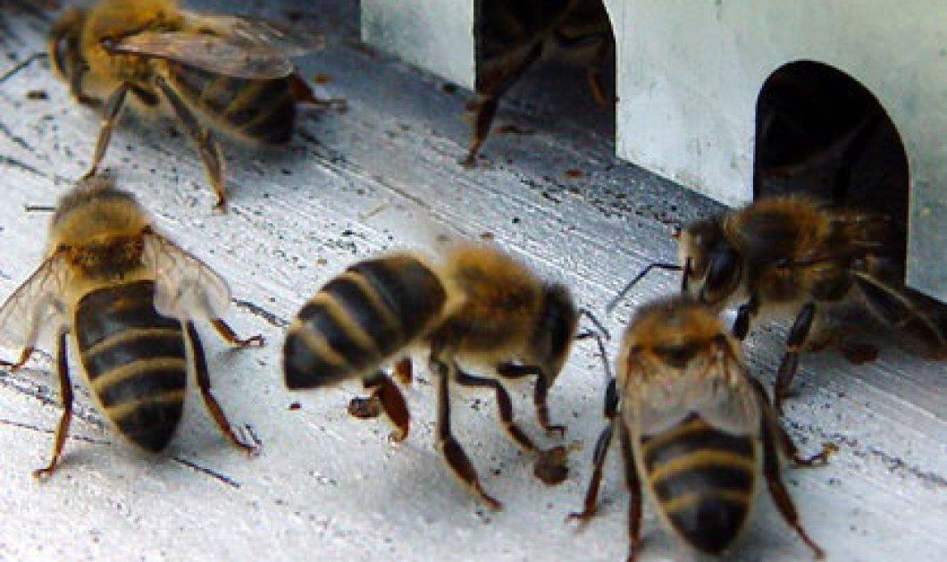 Τσιμπήματα από μέλισσες και σφήκες - Κυρίως Φωτογραφία - Gallery - Video