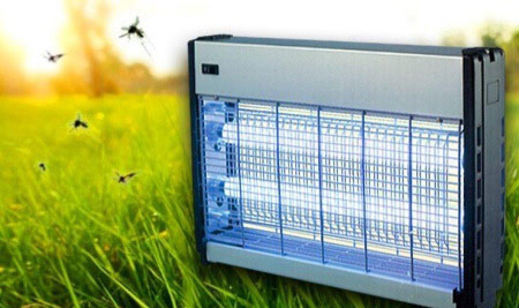 Πώς θα απαλλαγείτε από τα έντομα με φυσικούς τρόπους - Κυρίως Φωτογραφία - Gallery - Video