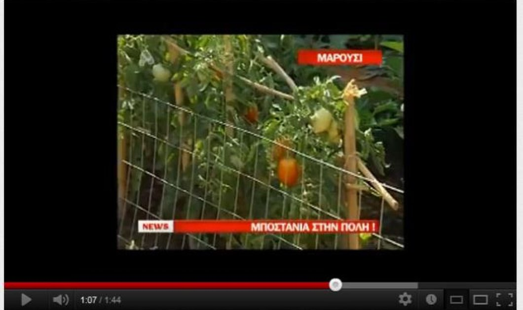 Έφτιαξαν το περιβολάκι τους με όλα τα καλά στο Μαρούσι - Δείτε το βίντεο! - Κυρίως Φωτογραφία - Gallery - Video