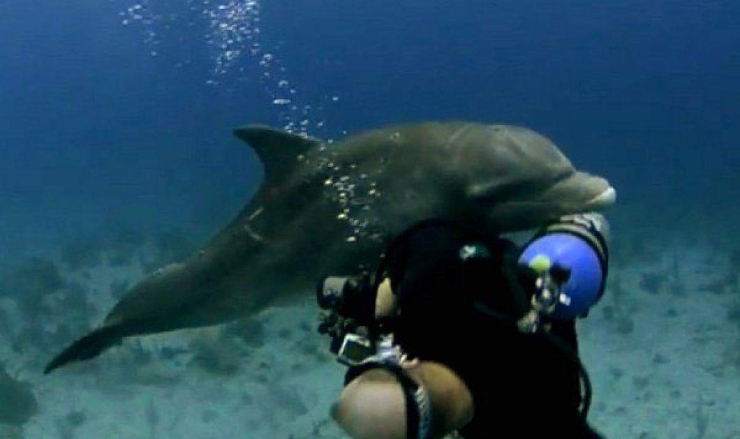 Δείτε το ξαναμμένο δελφίνι που επιτίθεται και ερωτοτροπεί με φωτογράφο στον βυθό! Έχει πλάκα! - Κυρίως Φωτογραφία - Gallery - Video