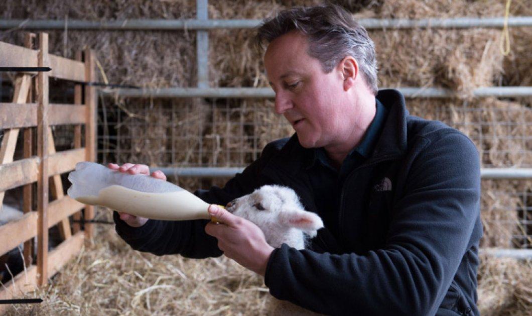 Βρετανία: 46 απίθανες φωτογραφίες 1 προεκλογική εκστρατεία - Μέχρι νεογέννητα κατσικάκια τάισαν οι υποψήφιοι  - Κυρίως Φωτογραφία - Gallery - Video