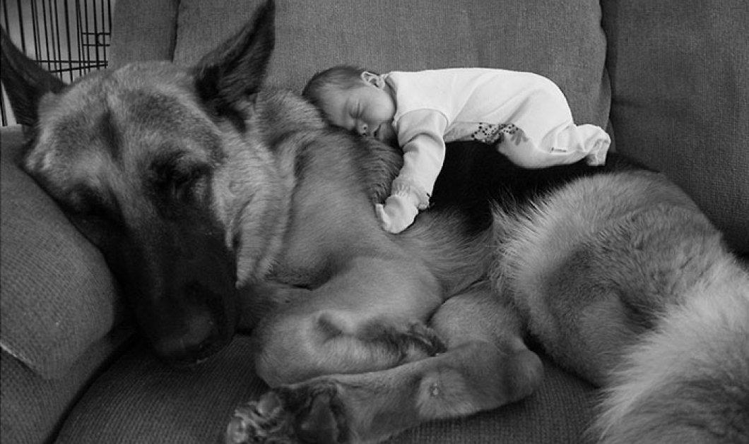 Αυτά τα 30 μωρά έχουν για φύλακες άγγελους τα σκυλιά τους - Υπέροχα στιγμιότυπα αγάπης  - Κυρίως Φωτογραφία - Gallery - Video