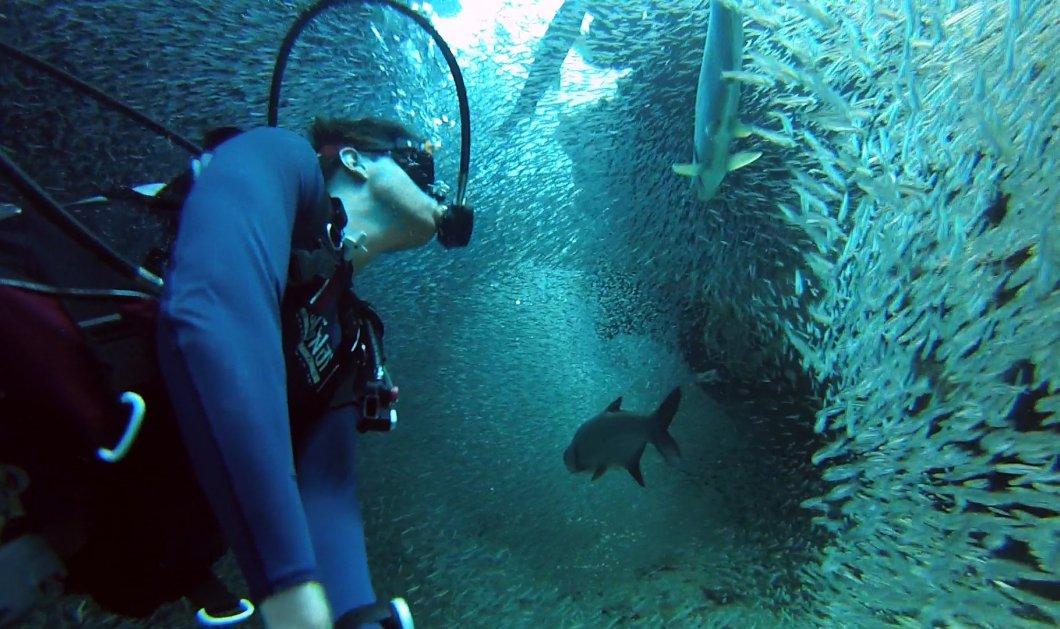 Εκπληκτικό βίντεο: Δύτης βουτάει στα καταγάλανα νερά της θάλασσας Silversides στο νησί Γκραντ Κέιμαν με μια κάμερα GoPro - Κυρίως Φωτογραφία - Gallery - Video