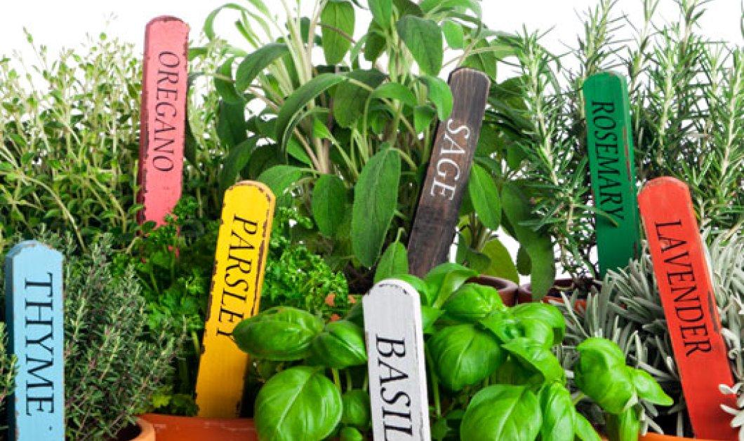 Πώς να μεγαλώσεις τα δικά σου μπαχαρικά & μυρωδικά στο σπίτι σου: Εύκολα & πρακτικά tips - Κυρίως Φωτογραφία - Gallery - Video