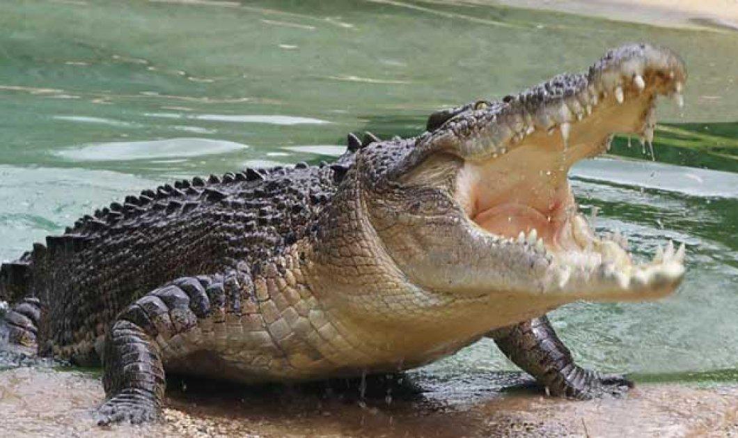 Κροκόδειλος καταβροχθίζει γιγάντια χελώνα στην Αυστραλία - Απίστευτες εικόνες κάνουν το γύρο του κόσμου! - Κυρίως Φωτογραφία - Gallery - Video
