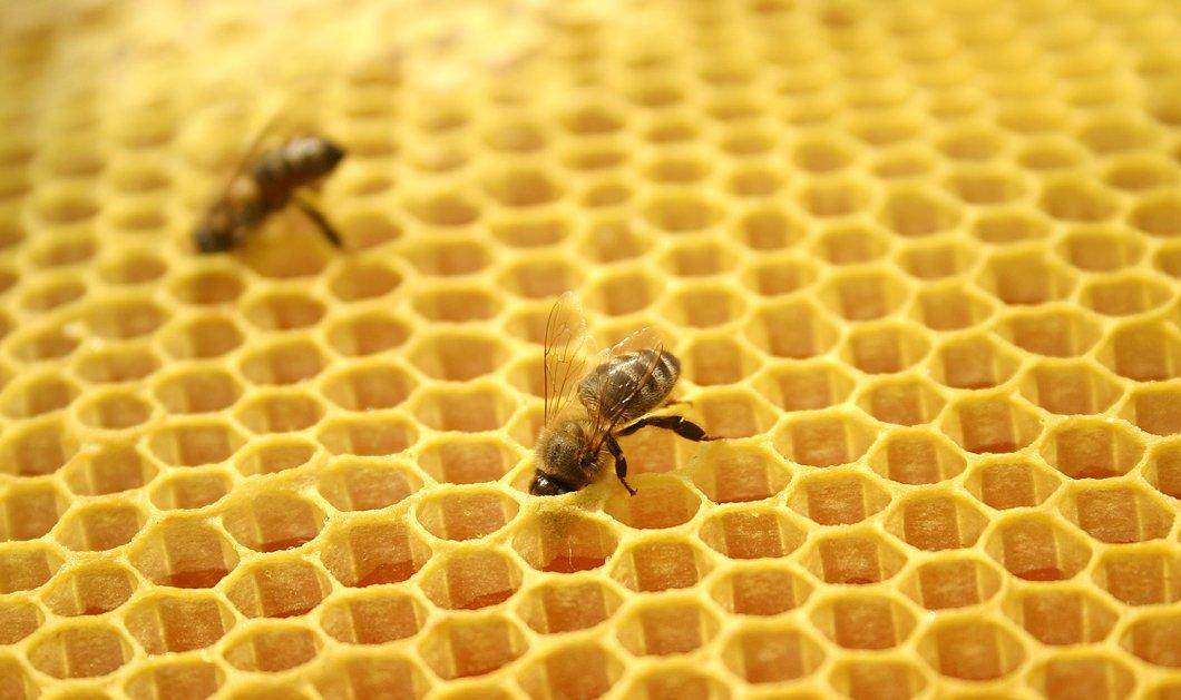 Θα σας κάνει να... κολλήσετε! Ξεκινά για 6η χρονιά το Φεστιβάλ Ελληνικού Μελιού & Προϊόντων Μέλισσας! - Κυρίως Φωτογραφία - Gallery - Video