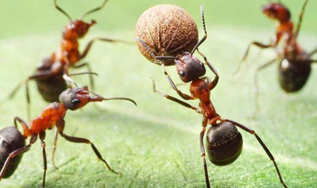 Πώς να διώξετε  τα μυρμήγκια από το σπίτι σας εύκολα και απλά - Ιδού τα πιο απλά tips - Κυρίως Φωτογραφία - Gallery - Video