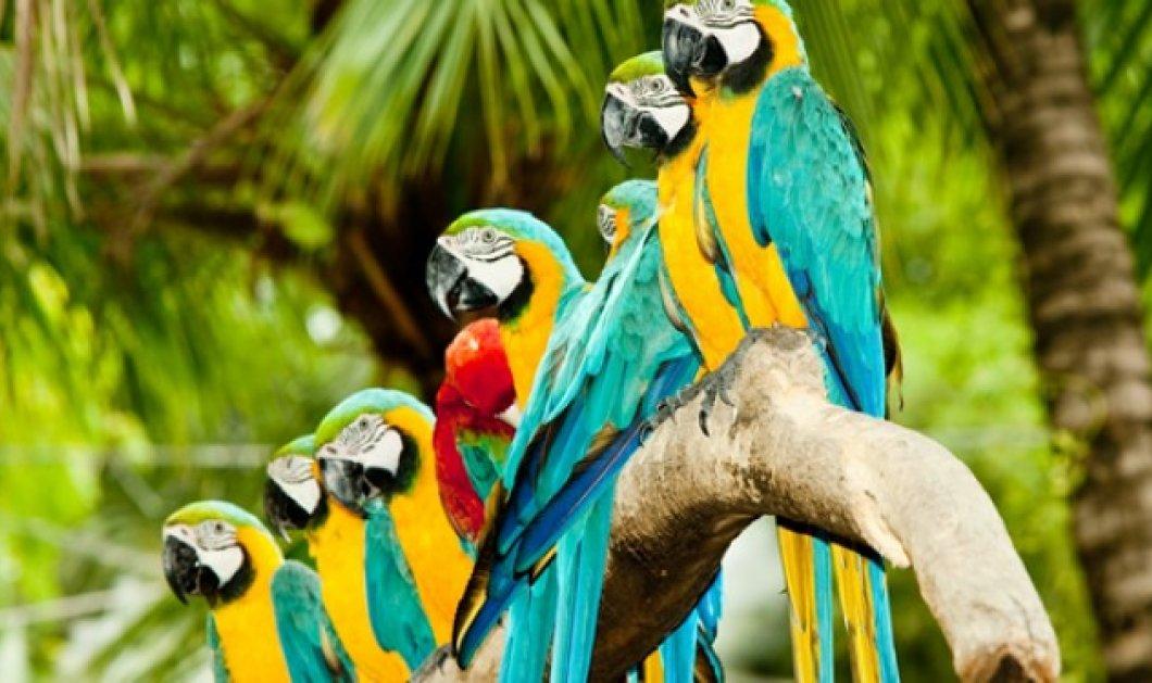 Απίστευτο κι όμως αληθινό! Έκλεψαν 50 παπαγάλους από τον Δημοτικό κήπο Χανίων! - Κυρίως Φωτογραφία - Gallery - Video