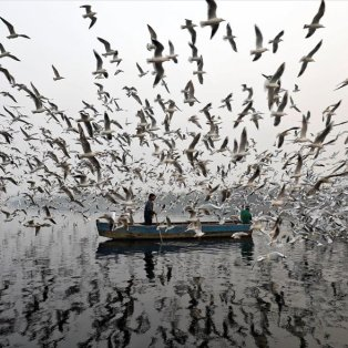 Νέο Δελχί, ομίχλη, κρύο, ψύχρα του πρωινού μα... η ζωή βρίσκεται πάντα εκεί - Φωτογραφία: REUTERS / SAUMYA KHANDELWAL - Κυρίως Φωτογραφία - Gallery - Video