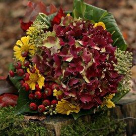 Τα 5 Φθινοπωρινά λουλούδια για αυτή την εποχή - Θα ομορφύνουν το σπίτι ή την βεράντα σου  - Κυρίως Φωτογραφία - Gallery - Video