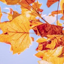 Καιρός: Συνεχίζονται οι όμορφες ημέρες - Πότε χαλάει ο καιρός;  - Κυρίως Φωτογραφία - Gallery - Video