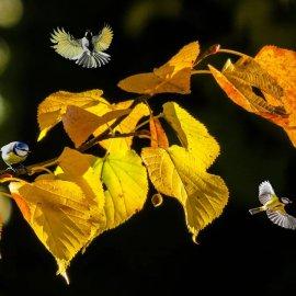 """Καιρός: Παραμένει φθινοπωρινό το σκηνικό μετά την επέλαση της """"Βικτώρια"""" - Που θα βρέξει  - Κυρίως Φωτογραφία - Gallery - Video"""