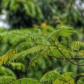 Χαλάει ο καιρός σήμερα Πέμπτη - Πού αναμένονται βροχές & χιονοπτώσεις - Κυρίως Φωτογραφία - Gallery - Video