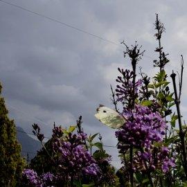 Καιρός: Συννεφιά στην Αττική - Σε ποιες περιοχές της χώρας αναμένονται βροχές; - Κυρίως Φωτογραφία - Gallery - Video