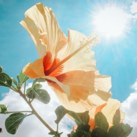Άνοδος της θερμοκρασίας - Βελτιώνεται σήμερα ο καιρός - Κυρίως Φωτογραφία - Gallery - Video